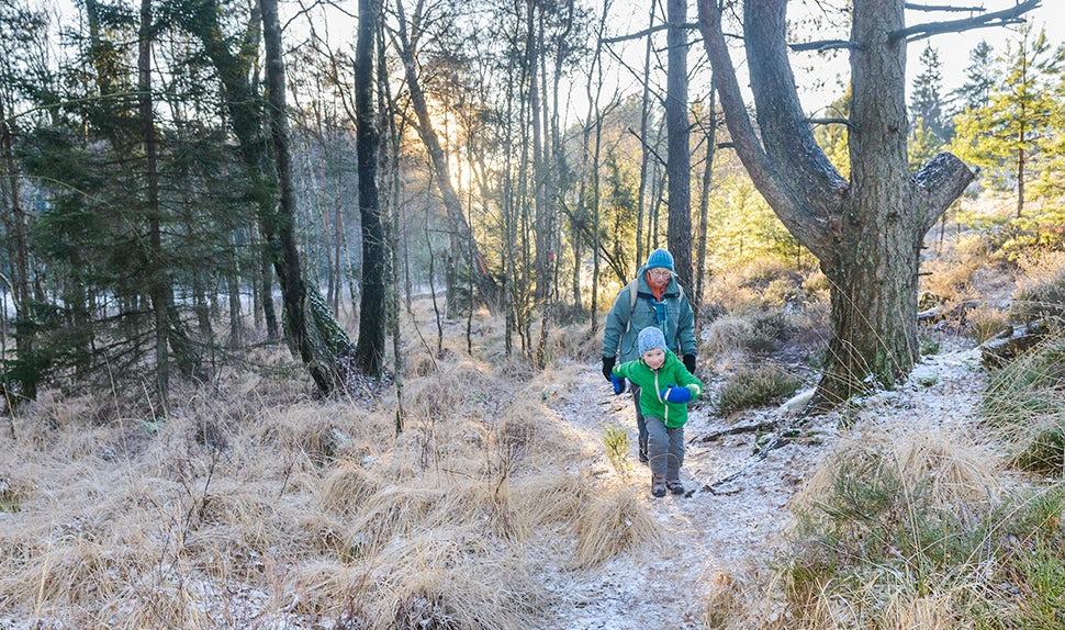 BABYBJÖRN Magazin – Ein Spaziergang im Wald ist eine gute Outdoor-Aktivität mit Kindern.